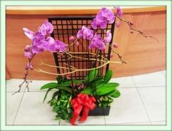 Орхидея (Orchidaceae)